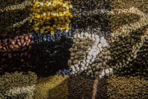 vente semences légale